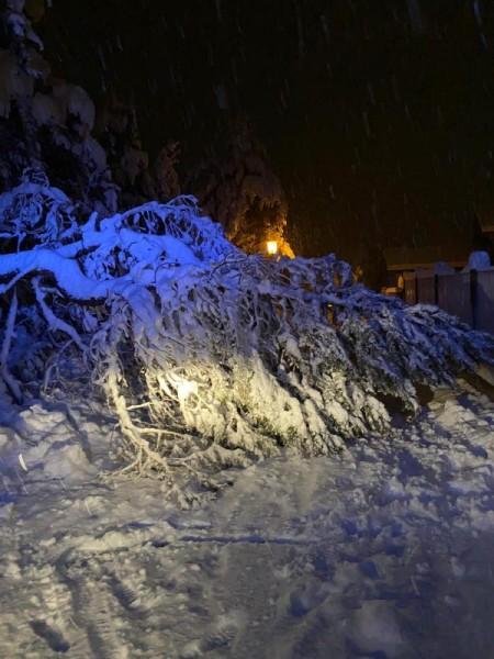 Schneeschaeden_11