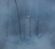 waldbrand_fiecht-26-05-9