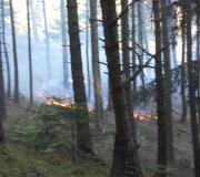 waldbrand_fiecht-26-05